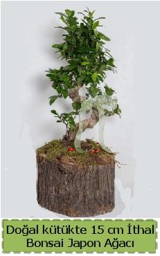 Doğal kütükte İthal bonsai japon ağacı  Bursa çiçek nilüfer İnternetten çiçek siparişi