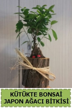 Kütük içerisinde doğal bonsai ağacı  Bursa çiçekçi osman gazi çiçek gönderme sitemiz güvenlidir