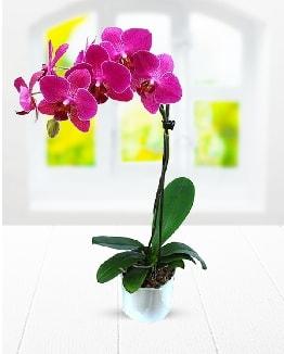 Tek dallı mor orkide  Bursaya çiçek yolla orhangazi çiçek satışı