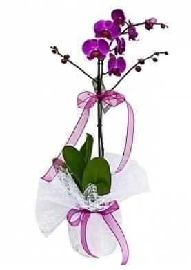 Tekli Mor Orkide  Bursa çiçek yolla nilüfer çiçek gönderme