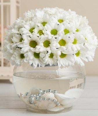 Fanusta beyaz Papatya  Bursaya çiçek yolla orhangazi çiçek satışı