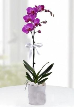 Tek dallı saksıda mor orkide çiçeği  çiçek yolla Bursa orhaneli çiçekçiler
